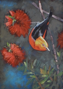 No. 14 Scarlet Honeyeater